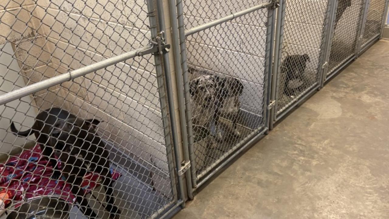 clarksville animal shelter