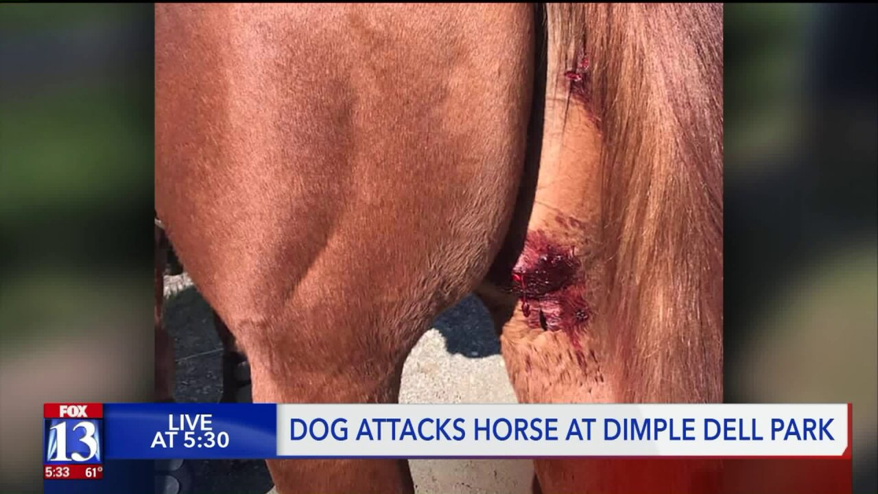 Horses attacked by unleashed dog at Dimple Dell RegionalPark
