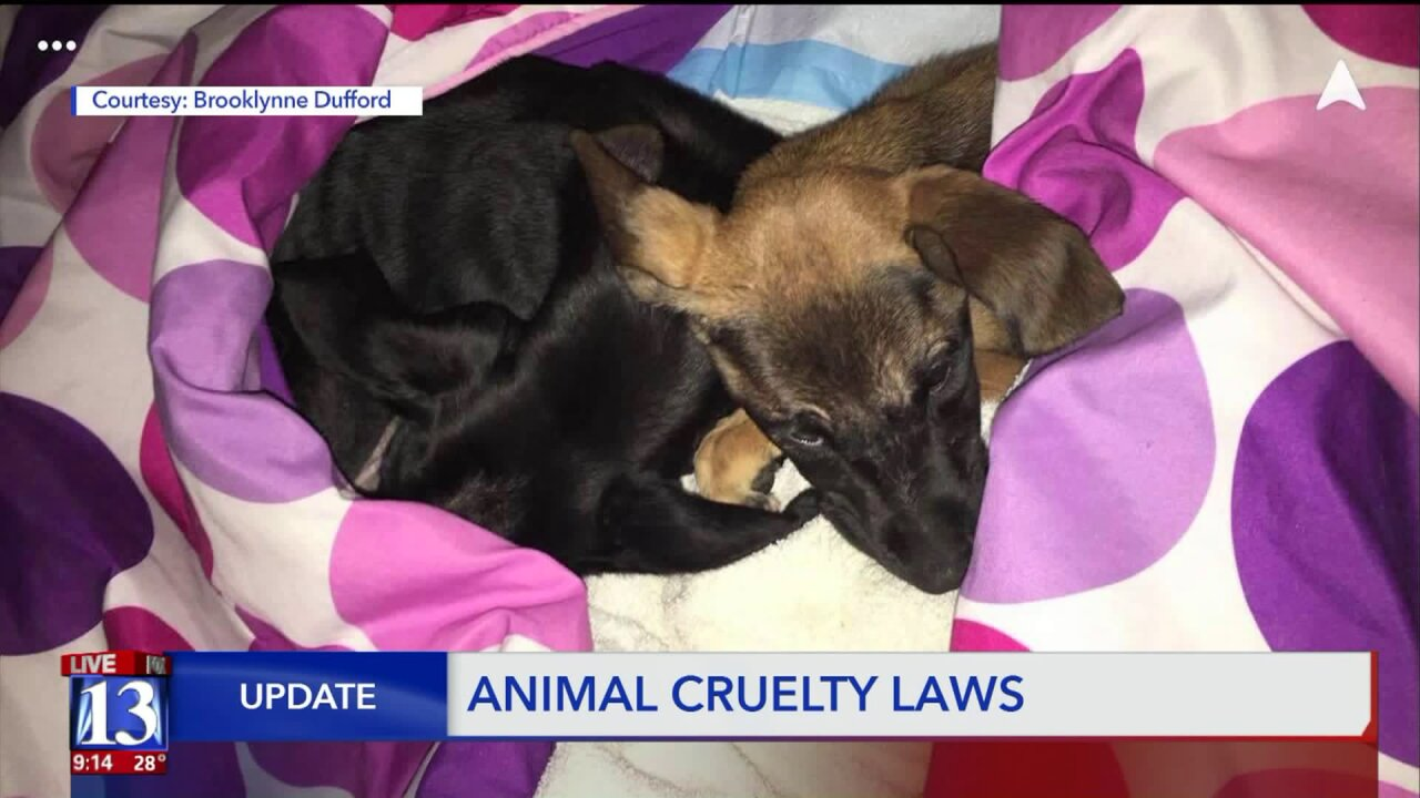 Utah, Wyoming near bottom of animal protection law rankings