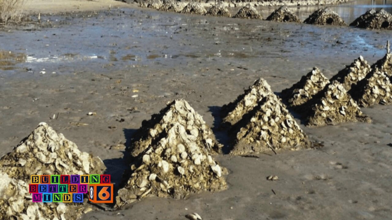 oyster beds.jpeg