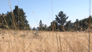 Montana Ag Network: New noxious weed Ventenata threatening Montana private and public lands