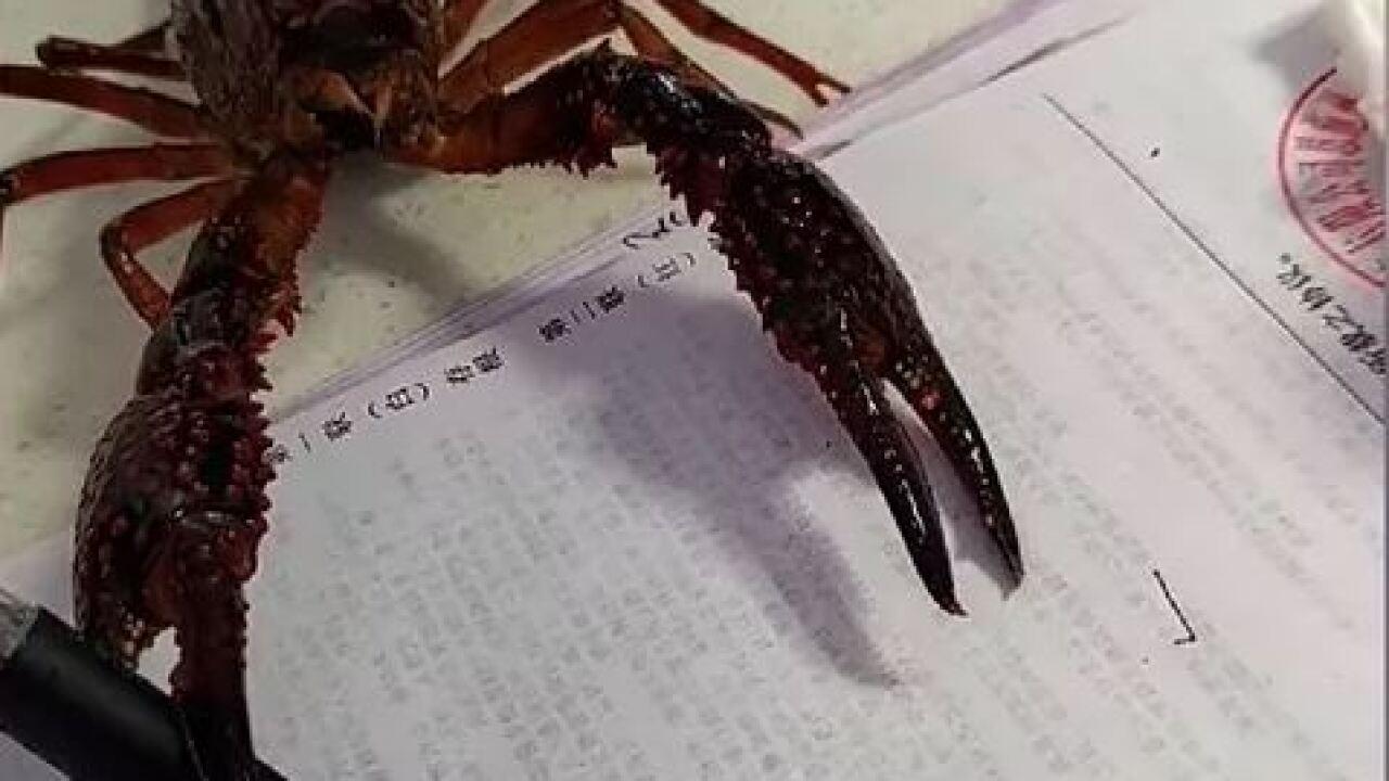 lobster writing.JPG