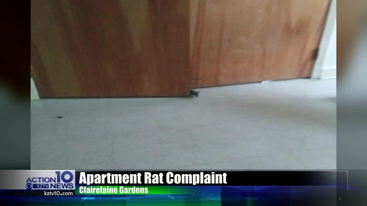 rat apartment
