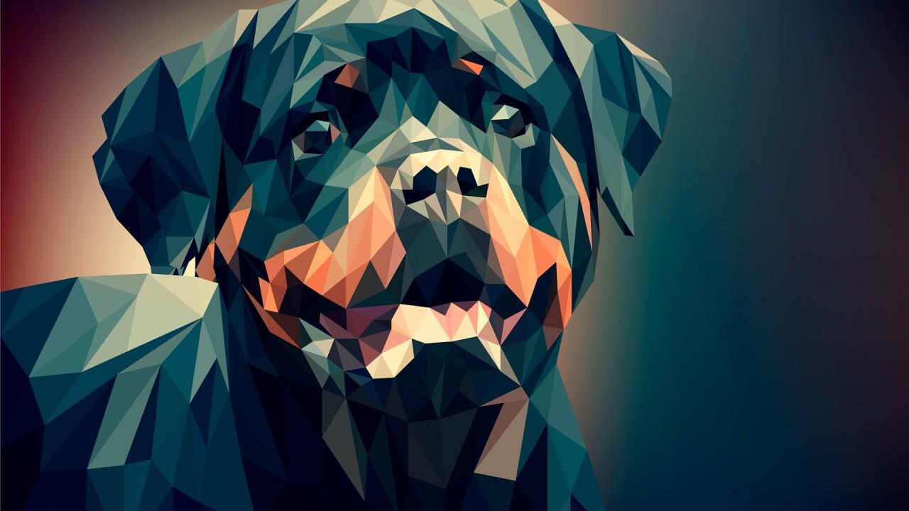 dog-3275593_1920.jpg