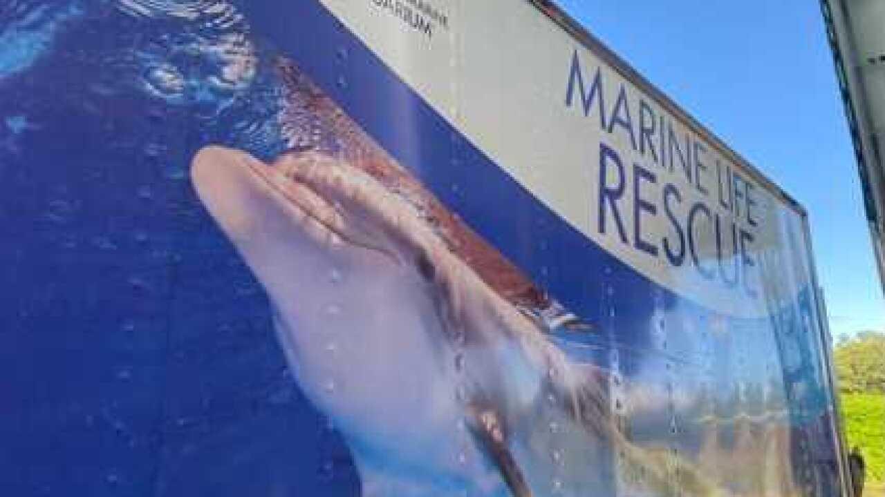 manatee-clearwater marine aquarium (1).jpg