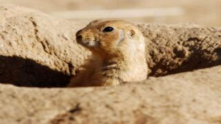 Boulder approves apartments over prairie dog colony