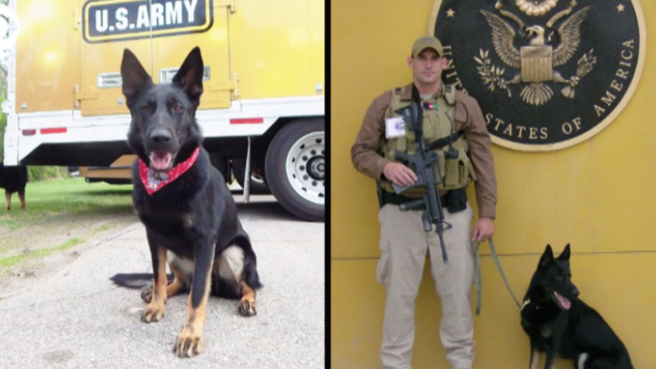 Meet courageous dogs on the front lines serving for oursafety