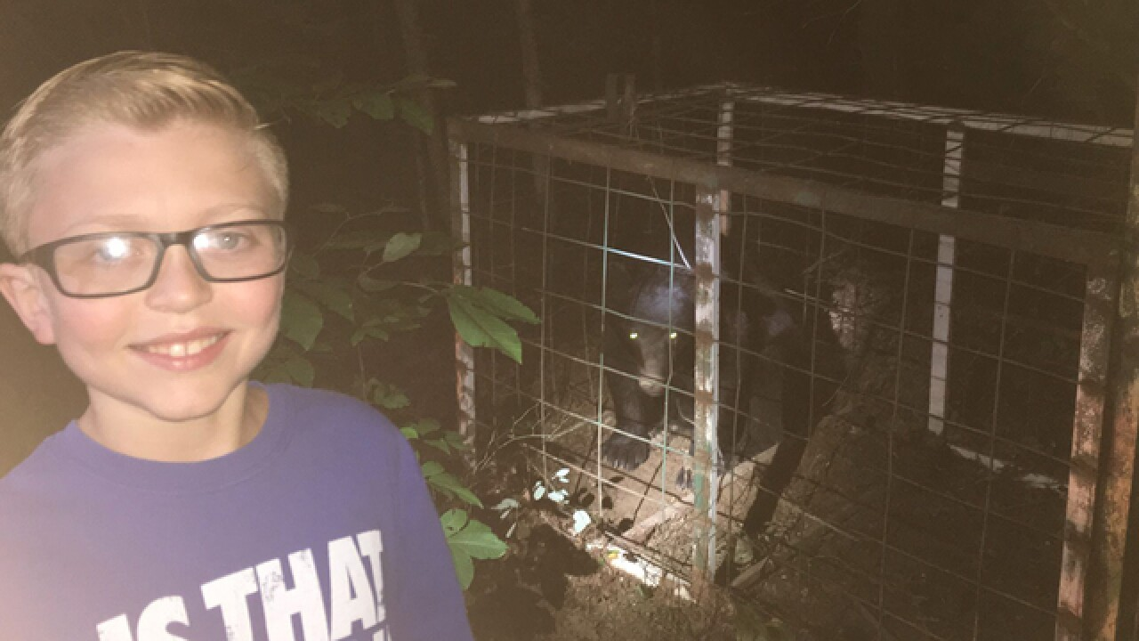 Bear Gets Caught In Hog Trap In Overton County