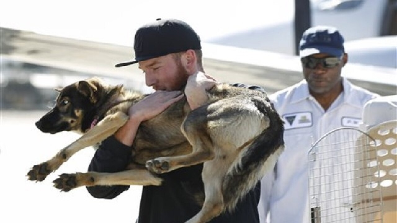 California dog presumed drowned found safe 5 weeks later