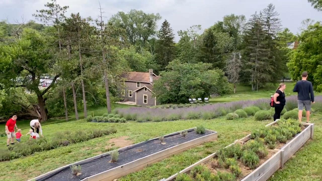 Cedar Ridge Trails Lavender farm
