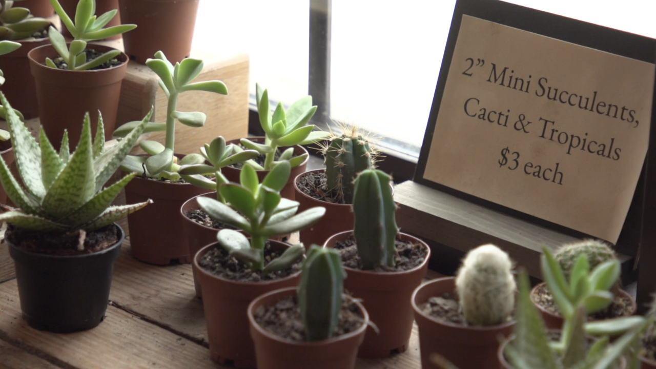 The vast majority of all the cacti in the world can only be found in the Americas, making them highly coveted. It has also led to an increase in plant poaching in the wild, threatening some species.