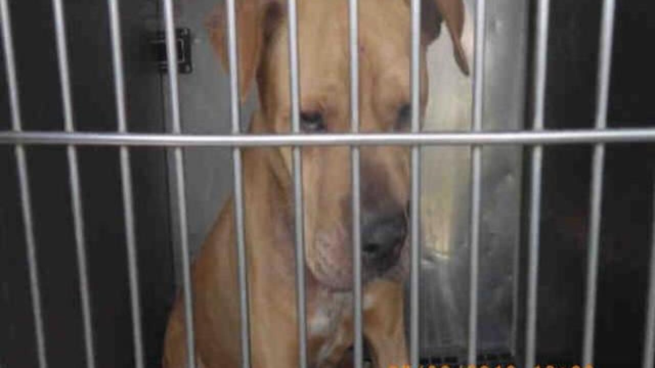 PHOTOS: 20 dogs up for adoption now at IACC
