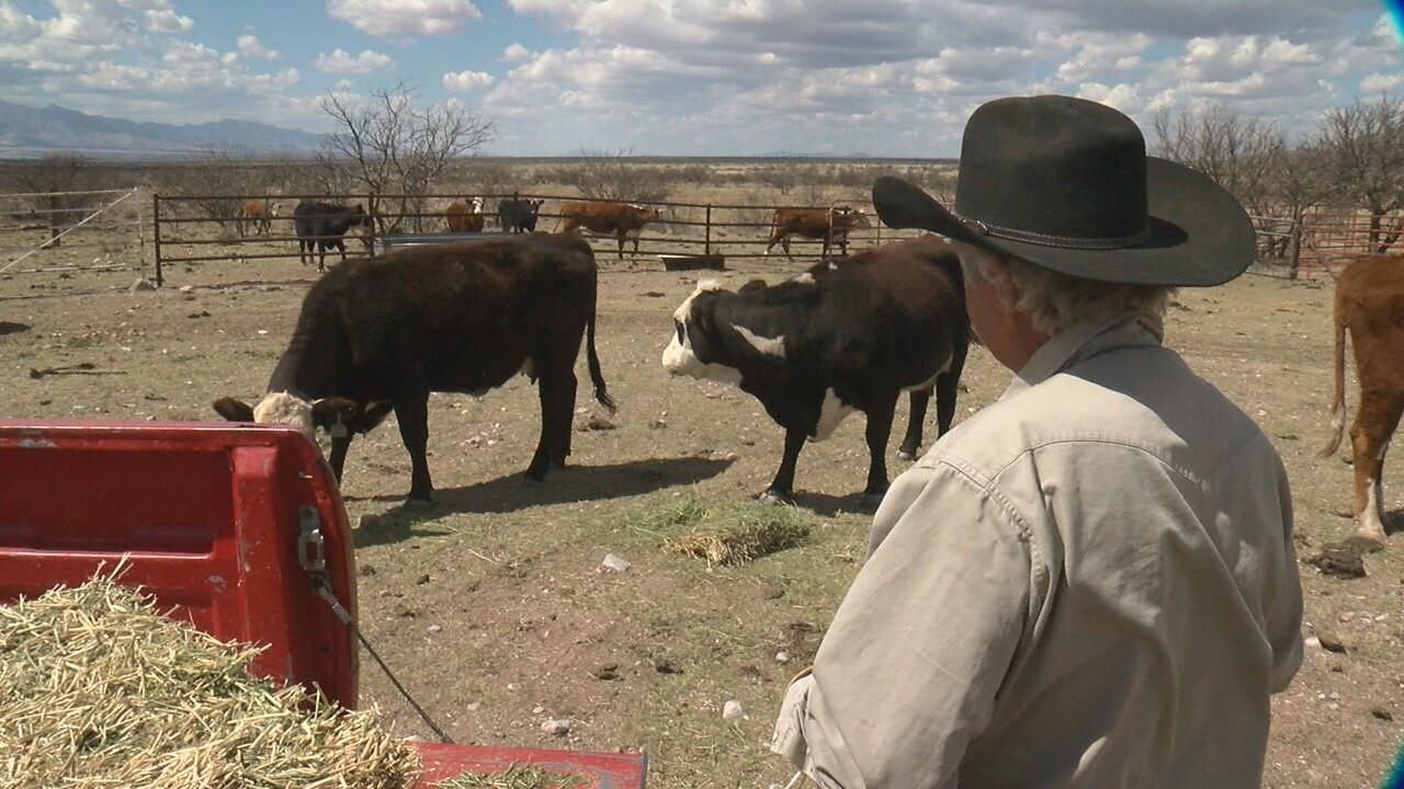Border-John Ladd-cows.jpg