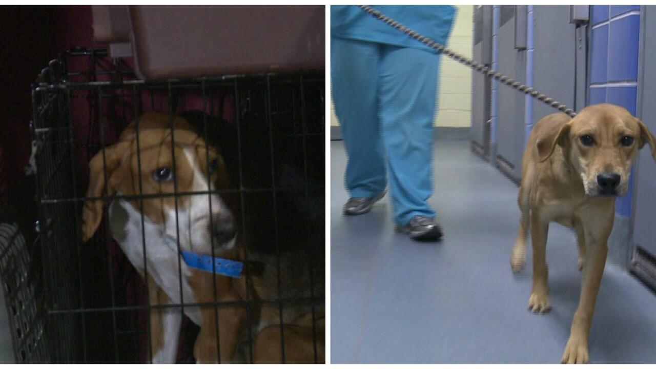 23 South Carolina shelter dogs arrive in Richmond foradoption