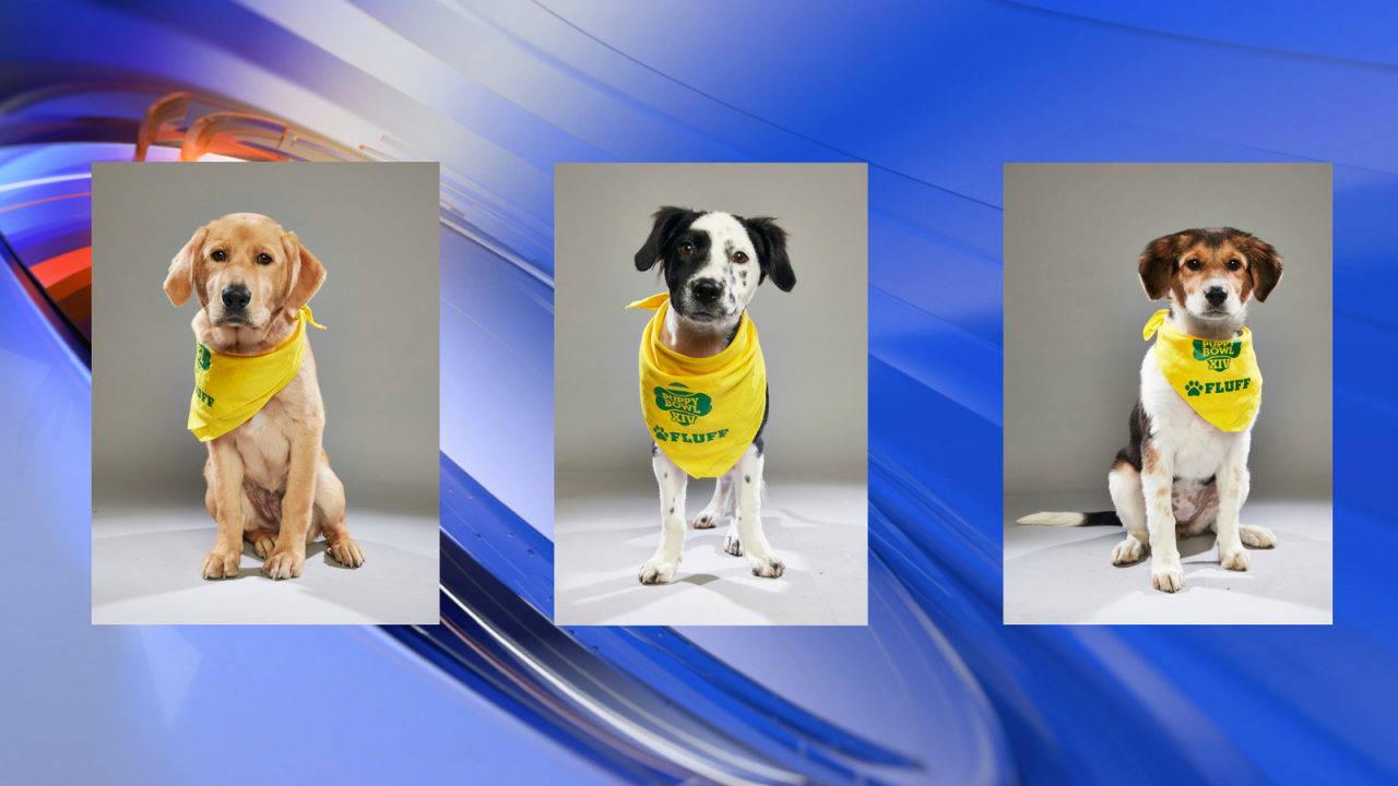 Virginia Beach SPCA dogs to play in Puppy Bowl XIV