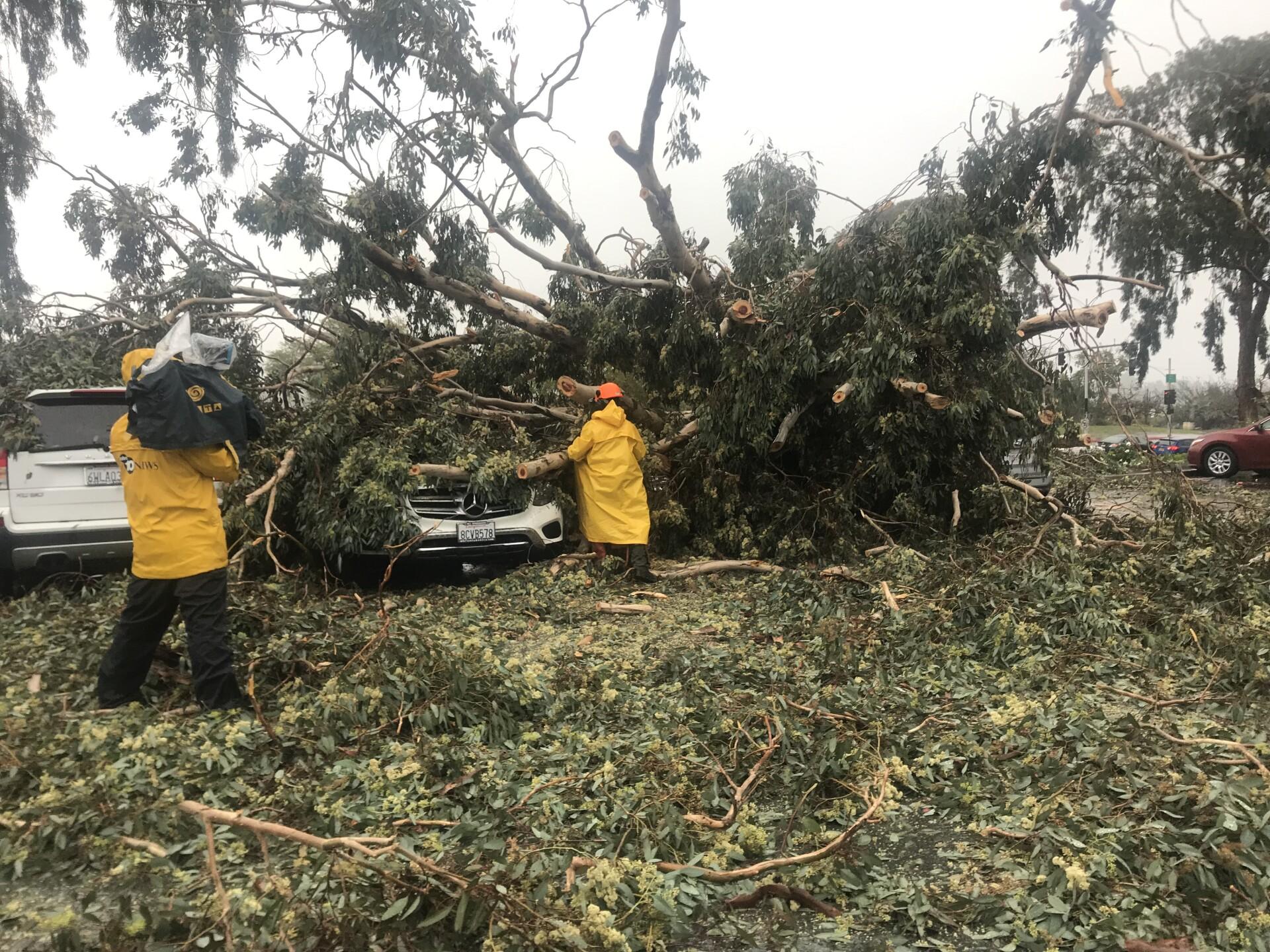 balboa park tree hits car 3