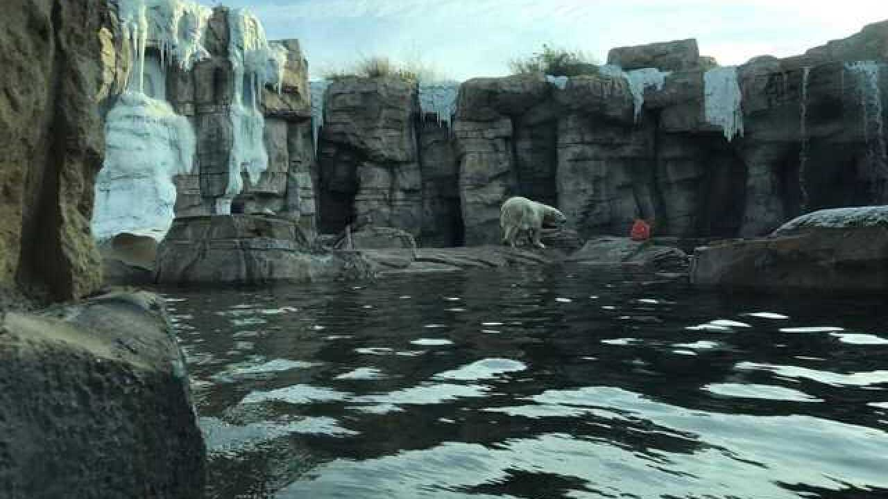 For animals at KC Zoo, how cold is too cold?