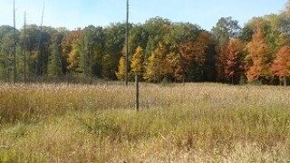 Looking for land? DNR public land auction begins Tuesday