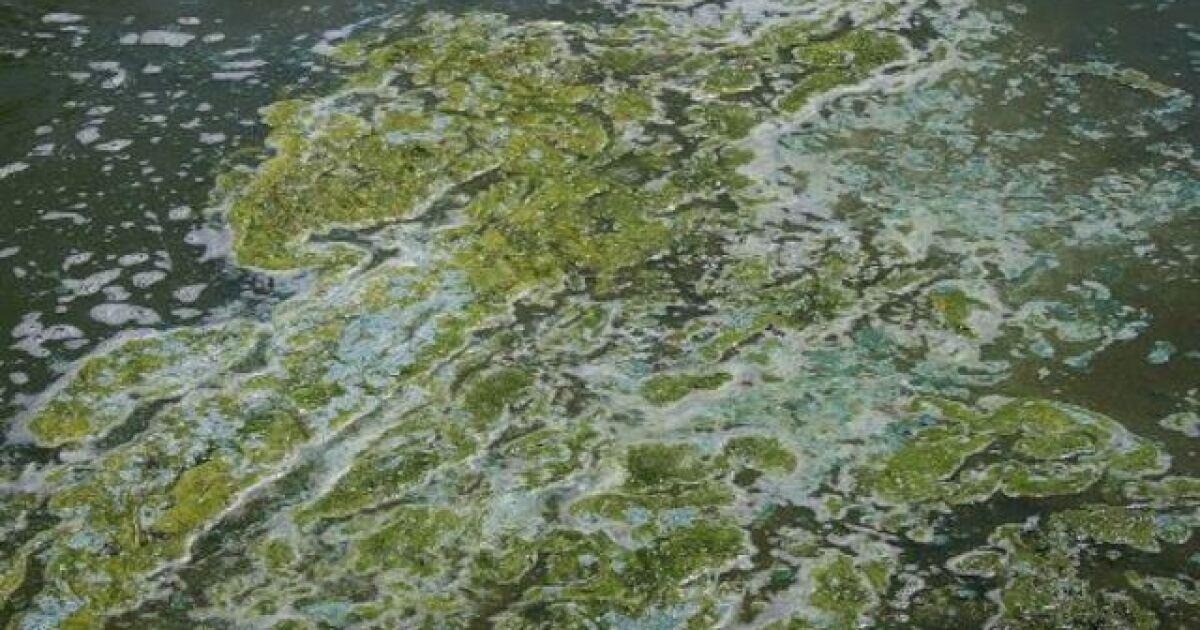 Blue-Green Algae Advisory in effect for multiple Indiana lakes