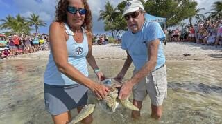 Florida Keys sea turtle participates in Tour de Turtles