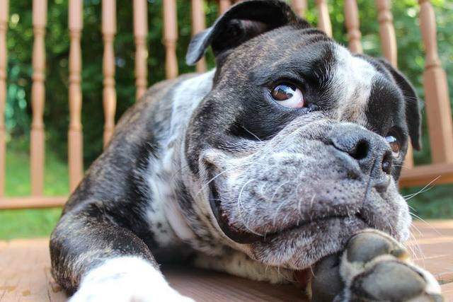 GALLERY: The cutest pets across WNY!