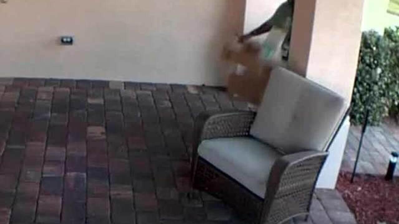 VIDEO: Stuart mail carrier dumps multiple packages onto porch