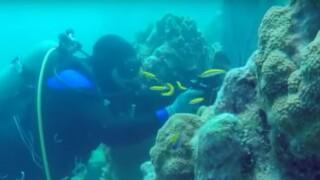 wptv-coral-reef.jpg