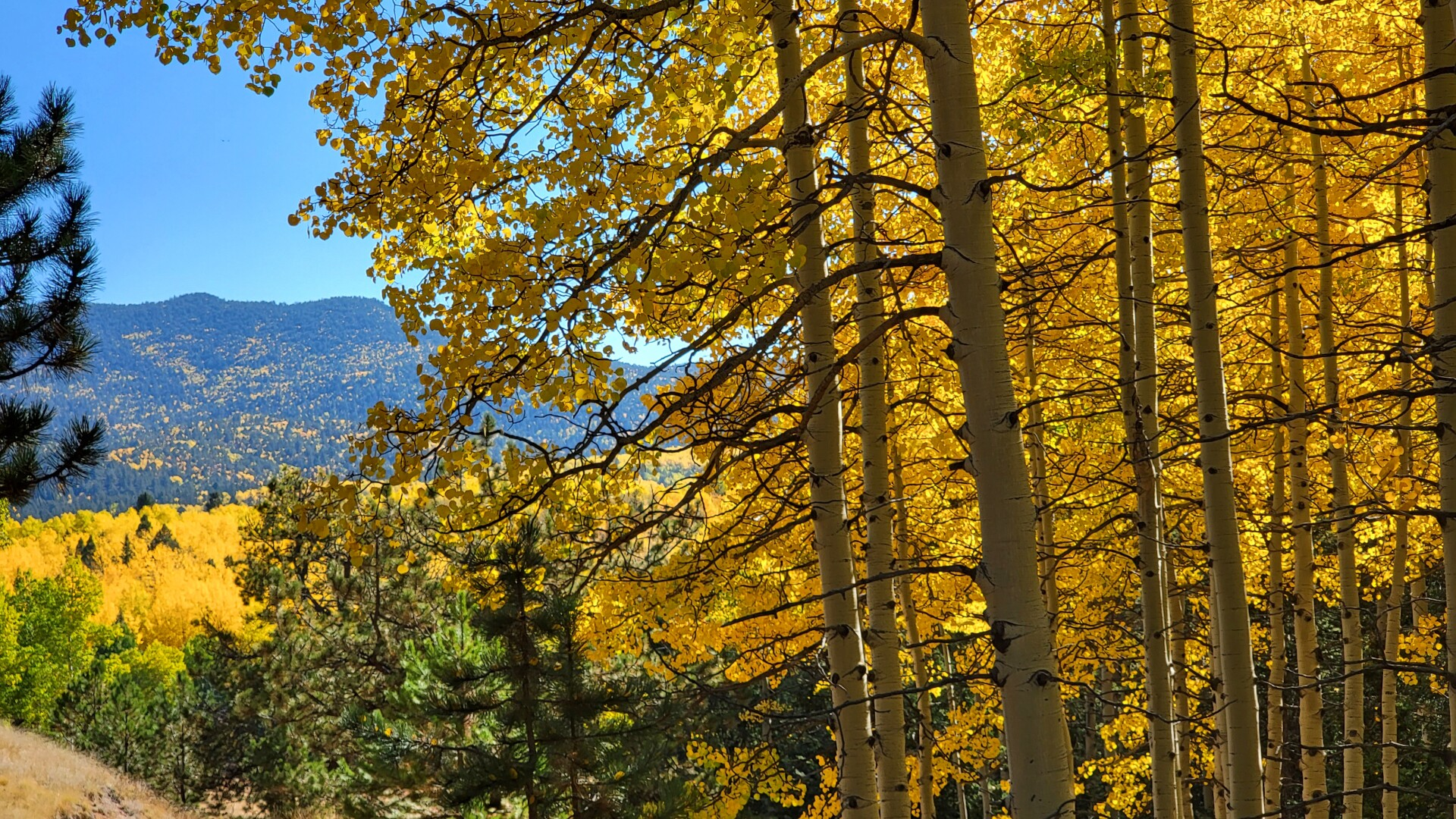 1Mueller State Park Russell Howell 2.jpg