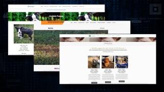 Fake-websites-selling-designer-dogs-000.jpg
