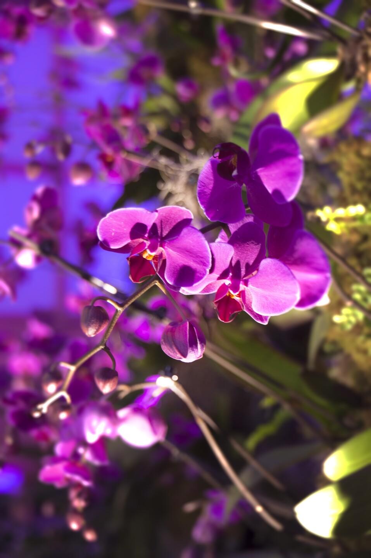 DSC_0012 blur.jpg