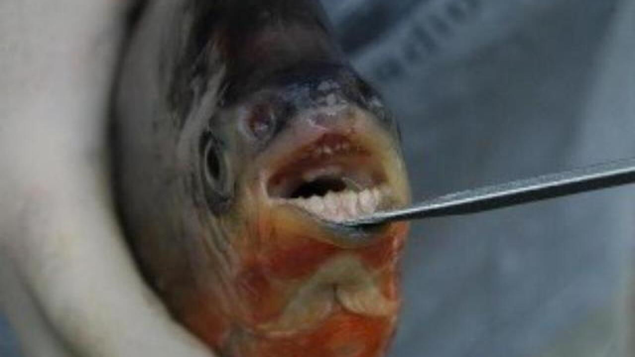 Fundraising for fish guts: Money sought for fish research