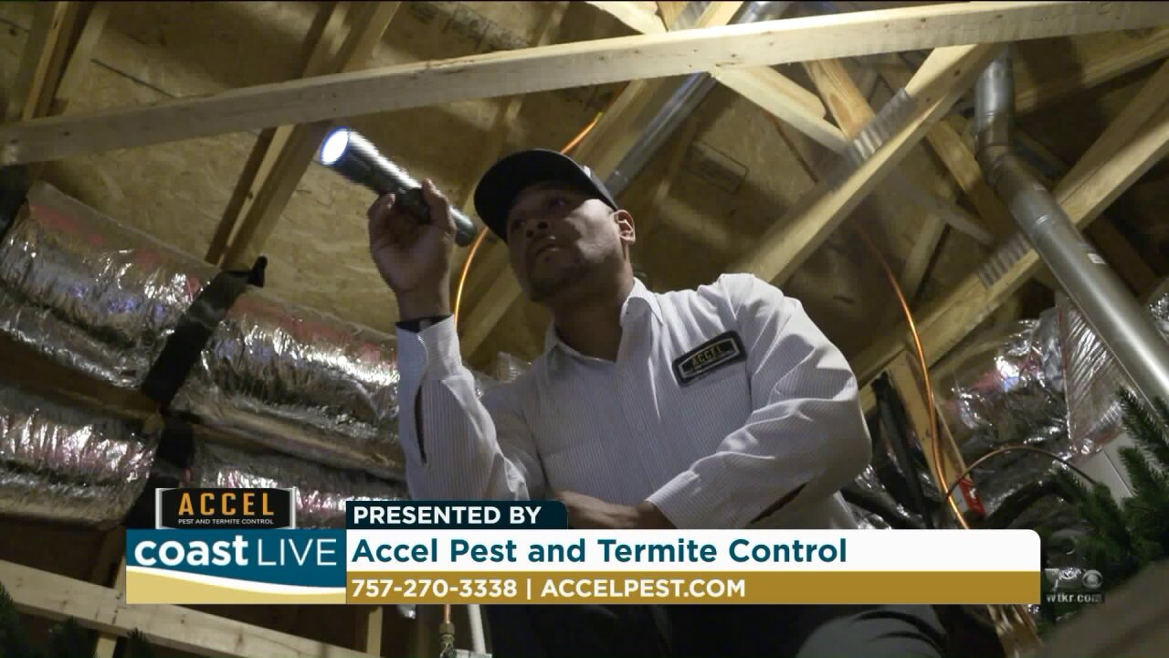 How and why fighting pests is a Fall time job on CoastLive