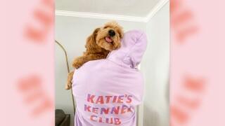 katei's kennel shelter drive.jpg