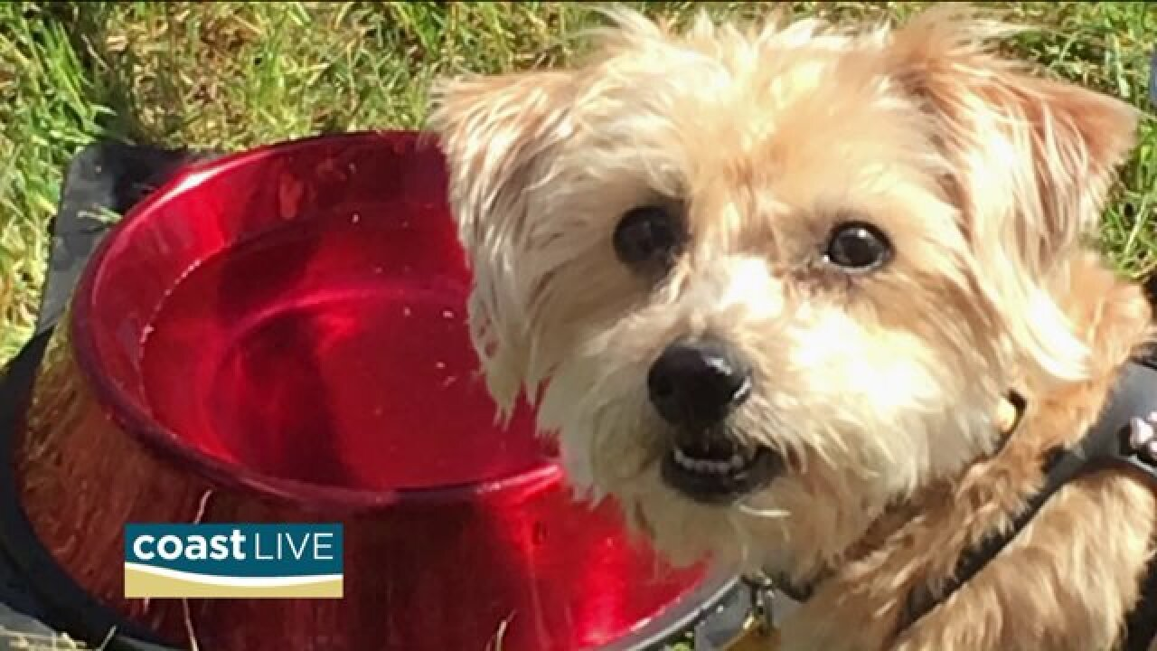 Learning how to make homemade treats for dogs on CoastLive