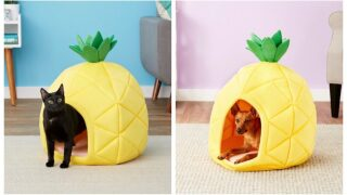 Keep Your Pet Comfy This Summer With An Adorable Pineapple Bed