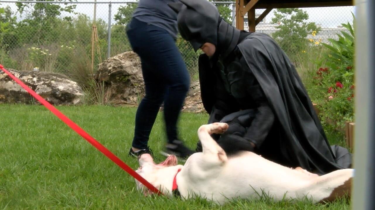 batman-animals-dogs-nonprofit