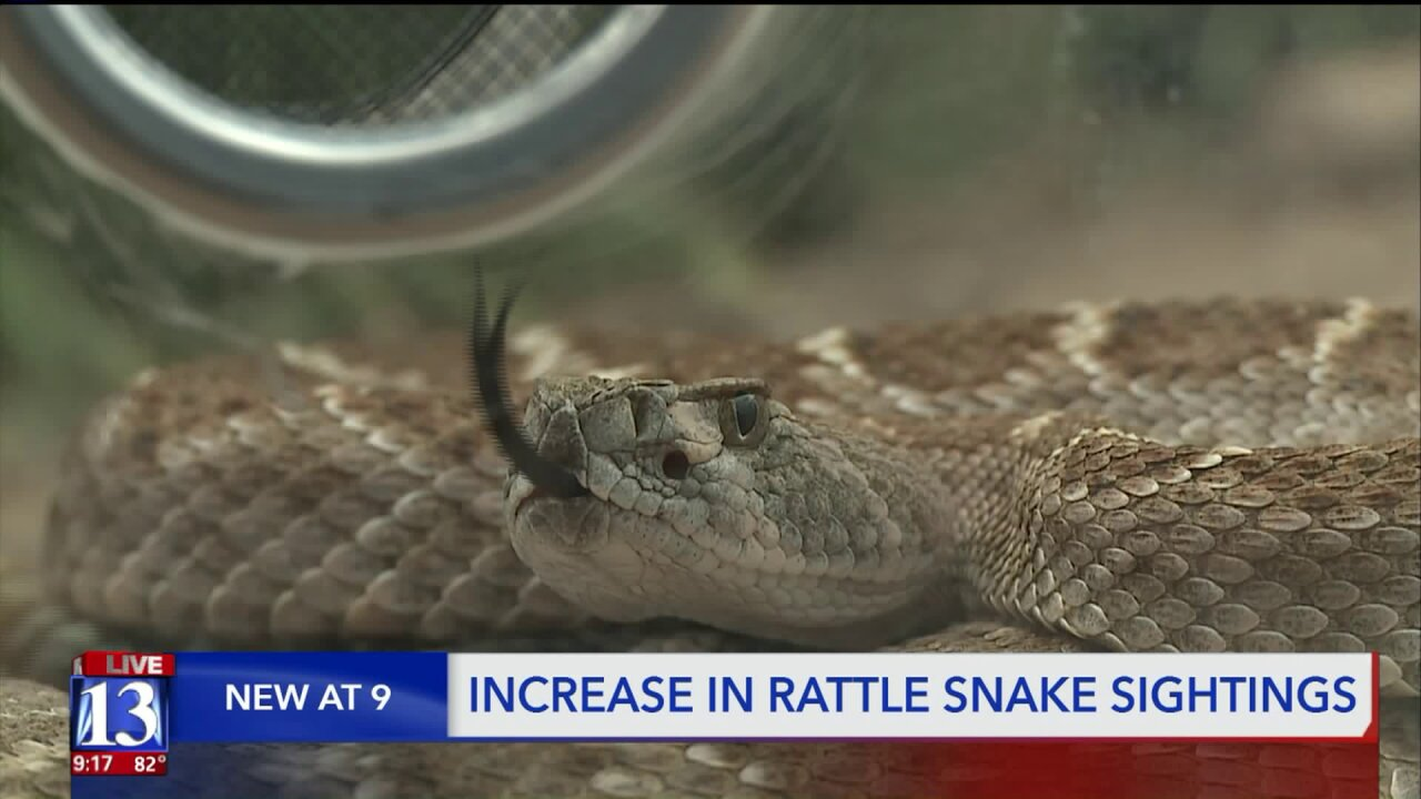 As rattlesnakes slither on Utah trails, here's how to staysafe