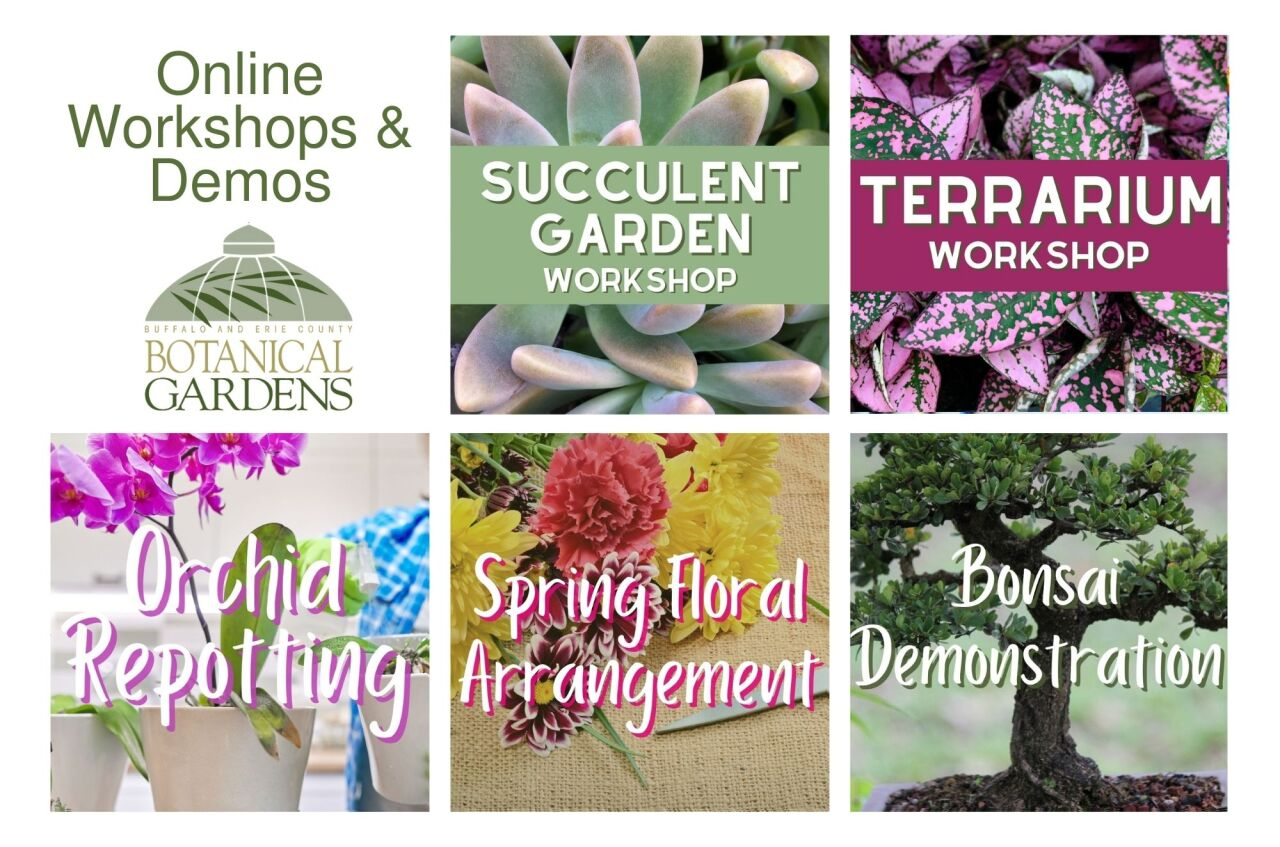 Botanical Gardens offers virtual workshops as well