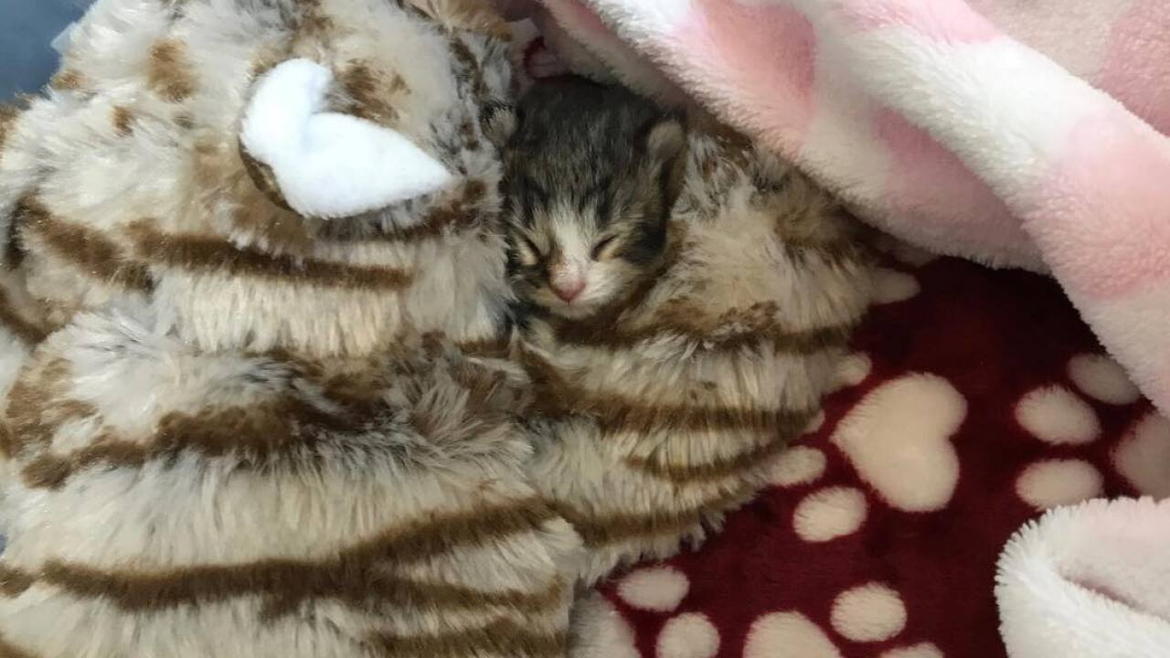 PACC NEEDS FOSTERS FOR AN OVERFLOW OF KITTENS