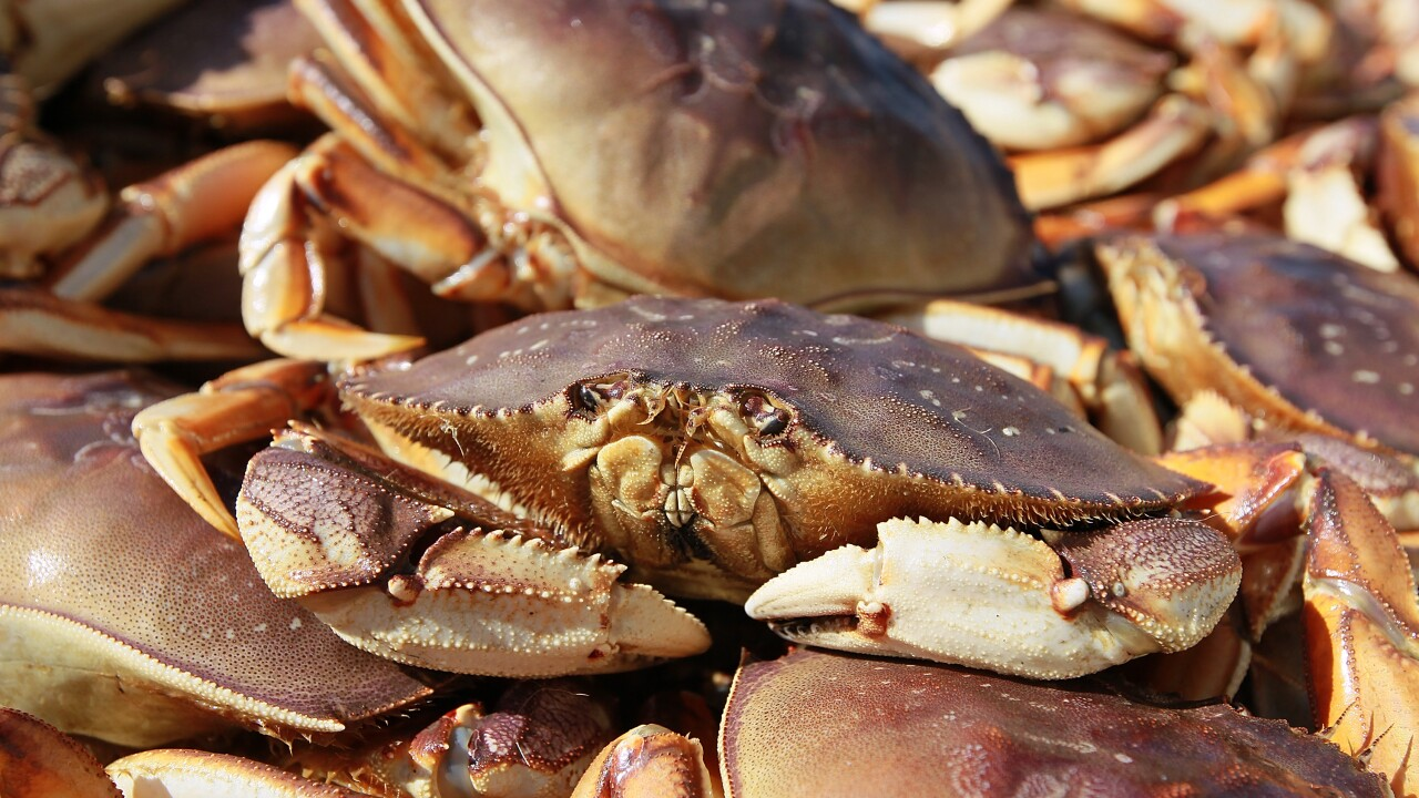 Pacific Ocean now so acidic that it's dissolving shells of Dungeness crabs, study finds