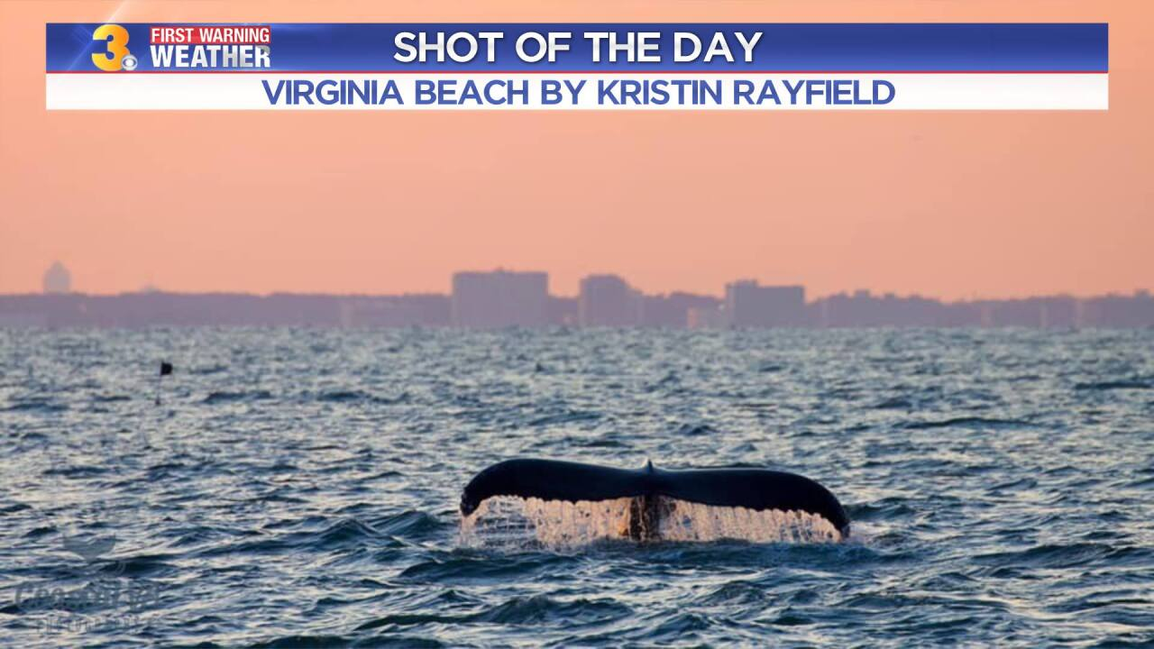 Whale Photo by: Kristin Rayfield