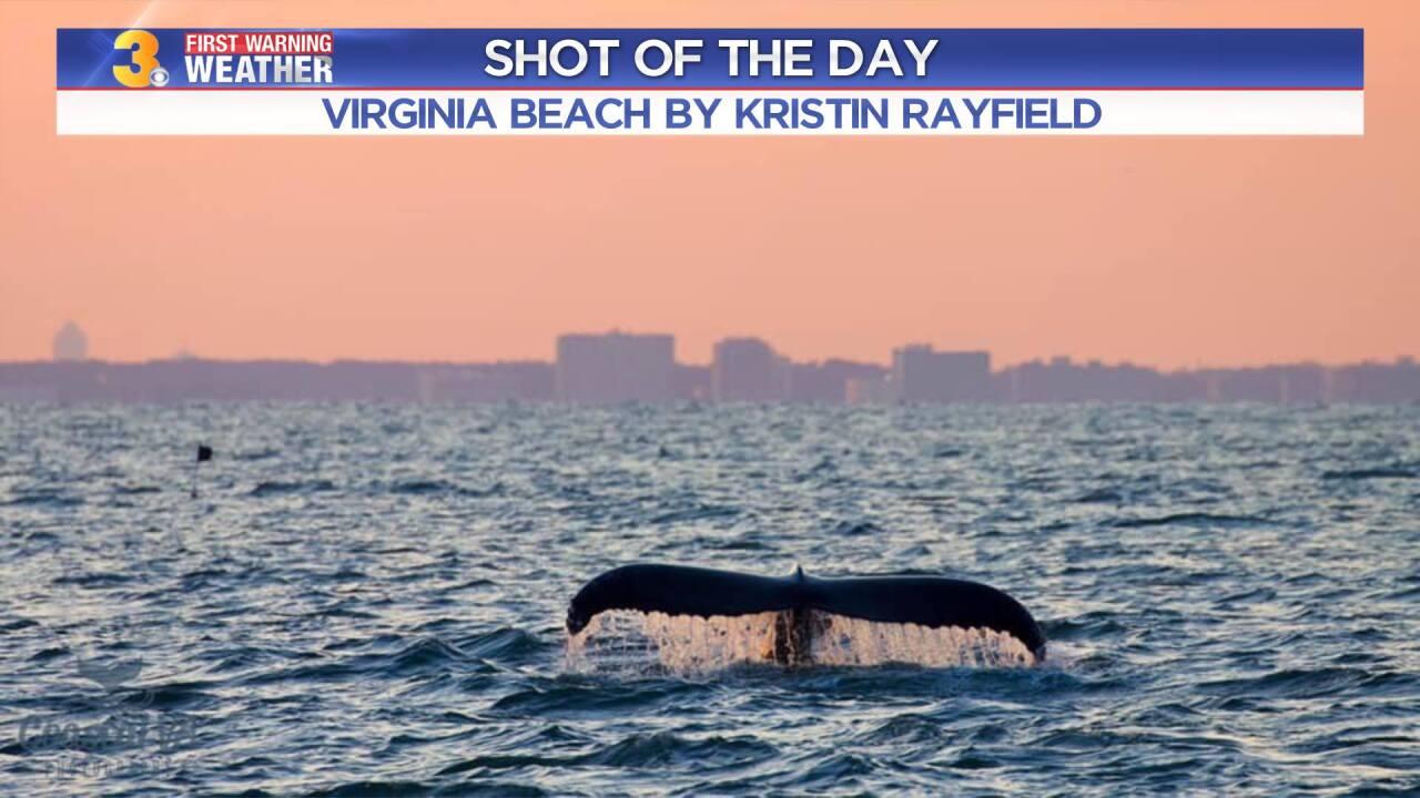 Whale Photo by: Kristin Rayfield