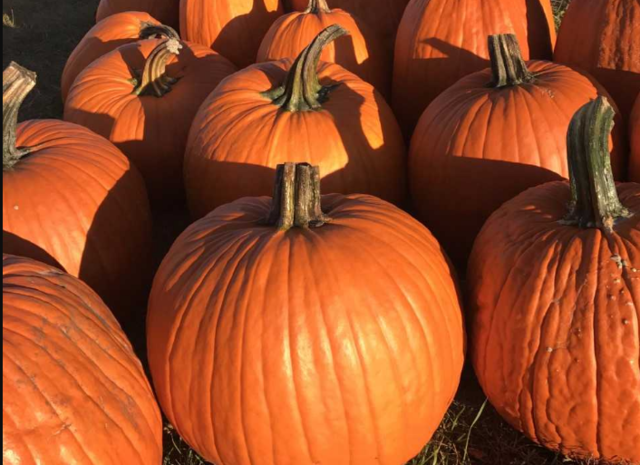 Cancer-surviving pumpkin farmer giving back