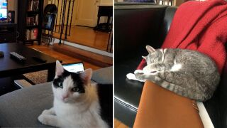 Quarantine cats.jpg