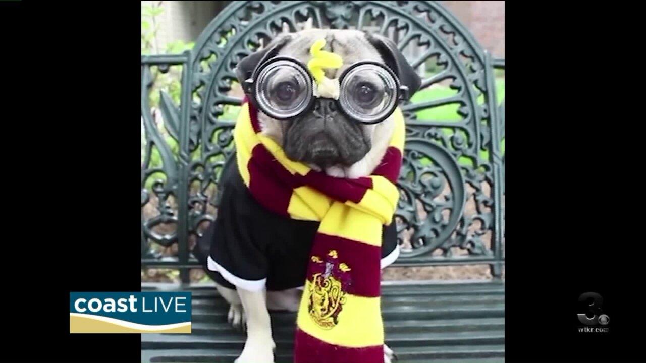 Facebook star Doug the Pug on CoastLive