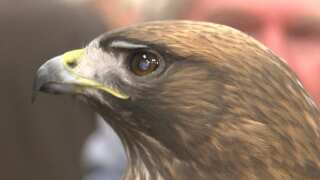 Winter Bird Festival kicks off in Morro Bay