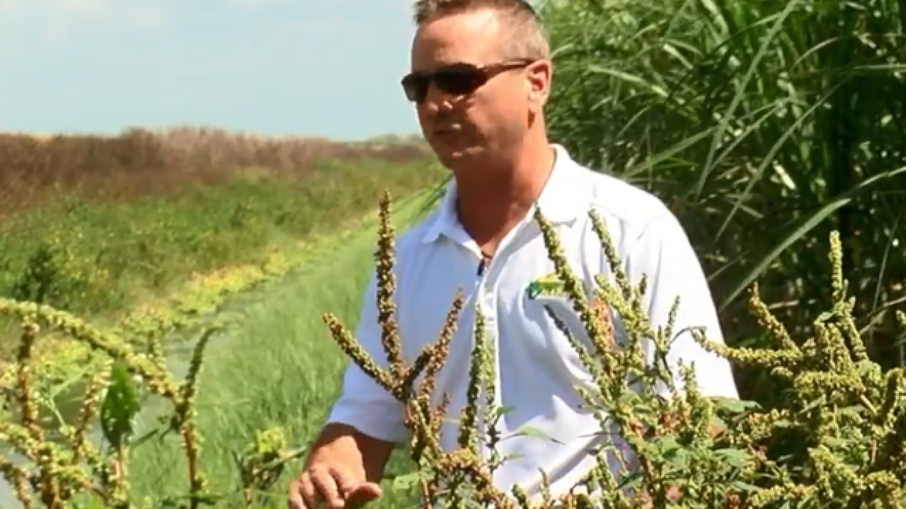 Palm Beach County farmer shows what he does to prevent pollution