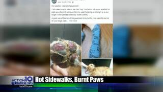 Dog suffers from severe burns due to hot pavement, how to keep it from happening to your pet