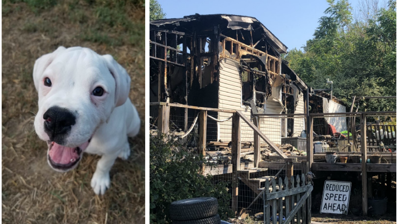 Couple escapes Chesterfield house fire, family puppy missing