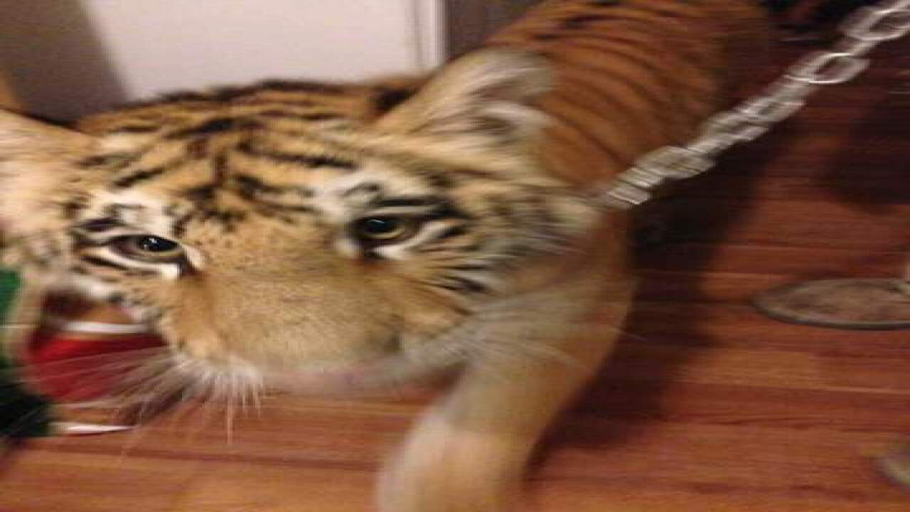 Police: Woman, child lived with tigers, 'vicious' monkeys